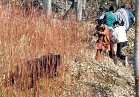 Медведь пожалел браконьера