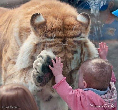 Дети и тигры