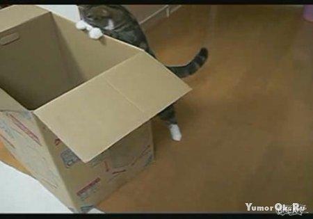 Кот против коробки