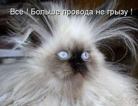 Кошко - юмор