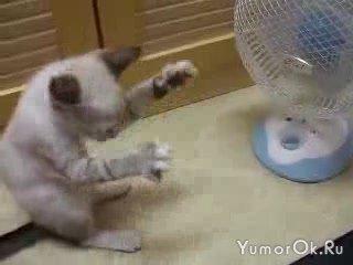 Котёнок против вентилятора