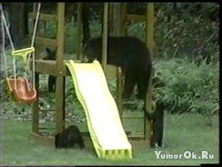 Медведи на горке
