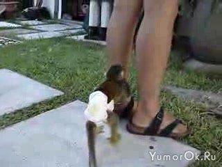 Не обижайте маленьких обезьян