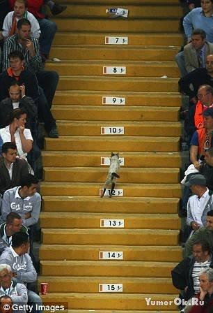 Самый главный болельщик на кубке УЕФА