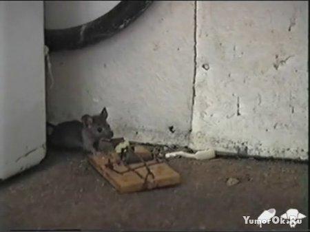 Мышкам явно повезло