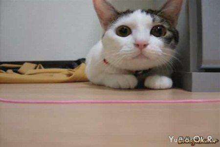 Кот под ЛСД