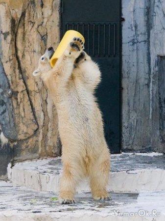 Позитивный медведь