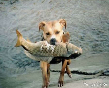 Собака - рыболов