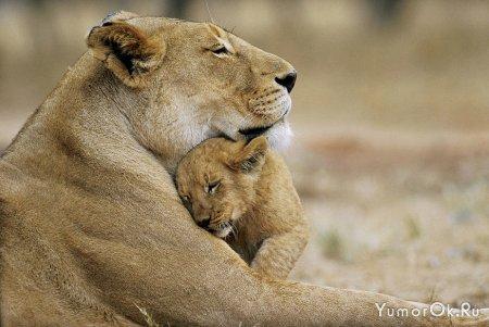 Мамы и их дети