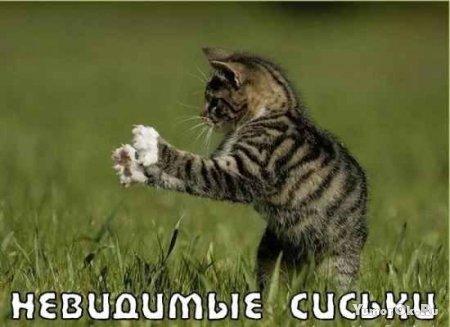 Коты с невидимыми предметами