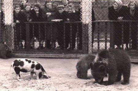 В Московском зоопарке 1920-50-х