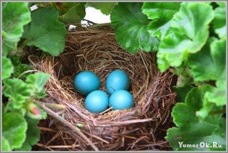Рождение птенцов