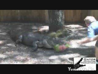 Крокодил и арбуз