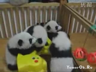 Настоящее Панда-кунфу