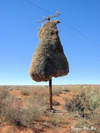 Гнезда в необычных местах