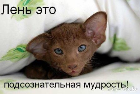 Надписи и кошки