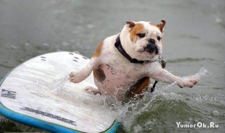 Собаки - серферы