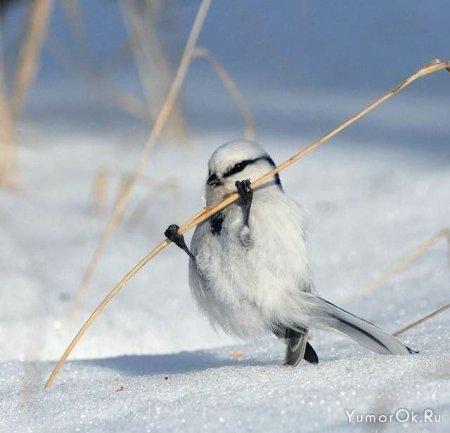 Классные фотографии птиц