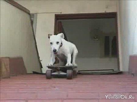 Собака - экстремал