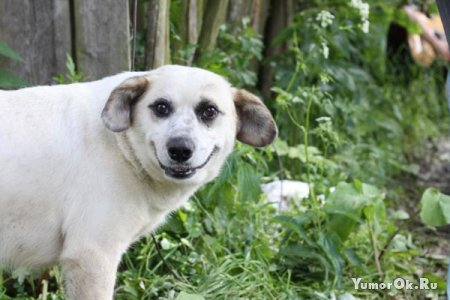Улыбающаяся собака передает вам всем Привет