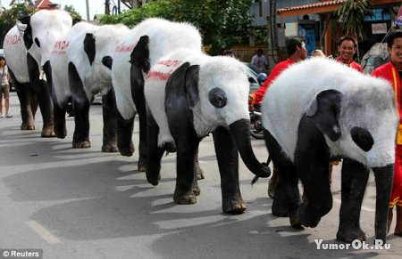 Слонопанды