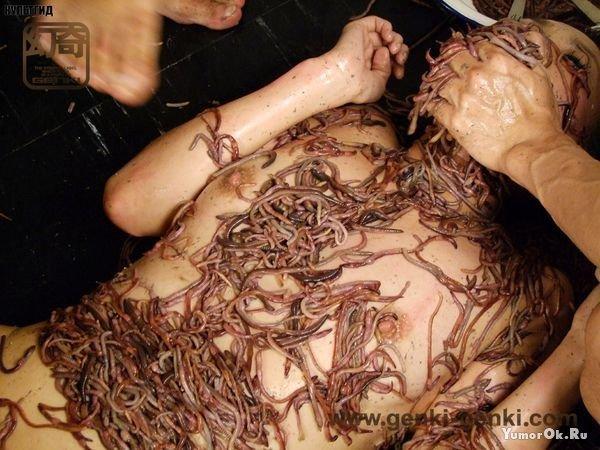 Порно с осминогами фото 279-356