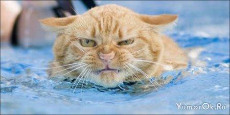 Плавающие кошки