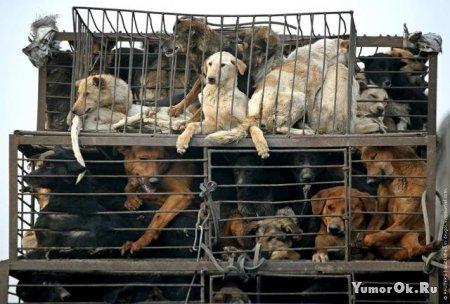 Собачьи рынки в Южной Корее