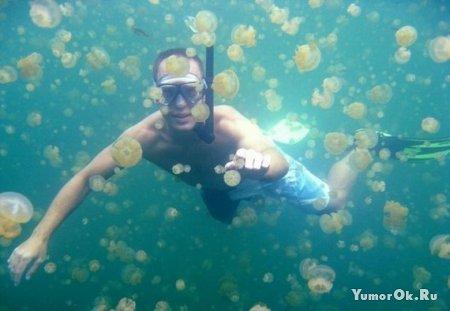 Царство медуз