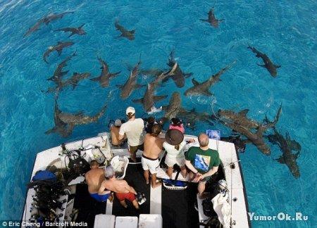 Заглянуть в пасть акуле