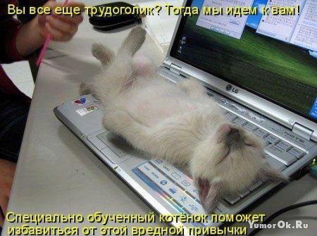 Фотографии животных с подписями