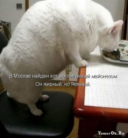 Прикольные картинки животных с подписями (часть 1)