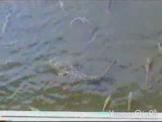 Если рыбу надолго оставить в покое