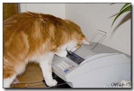 Кот-секретарь