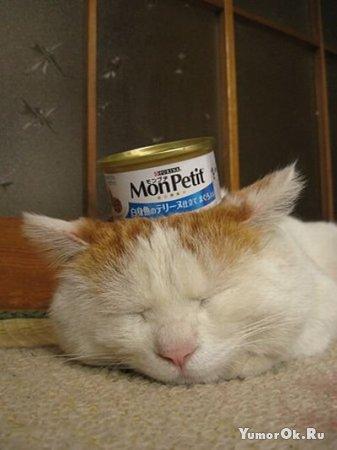 Еще один кот, который любит спать