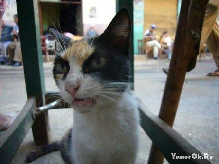 Ну очень злой кот