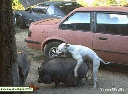 Неправильные собаки (часть 1)