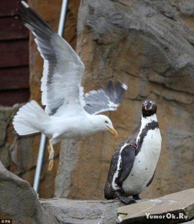 Гопник и пингвин
