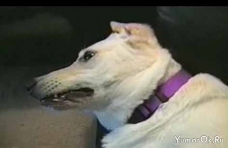 Задумчиво-невозмутимый пёс