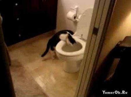Кот хозяин