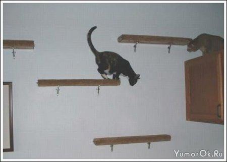 Кошачьи дорожки