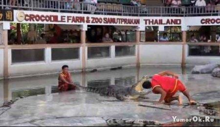 Трюки с крокодилами