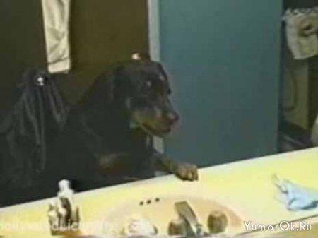 Собака и отражение