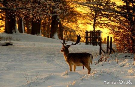 На улице зима