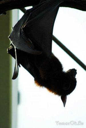 Летучие мышки