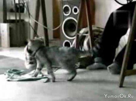 Кот уборщик