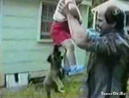 Приколы с собаками