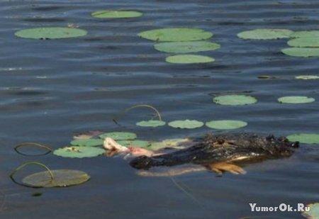 Хотела покормить алигатора