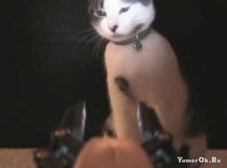 Котик боец