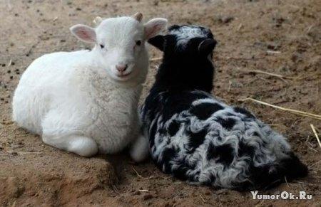 Симпатичные животные